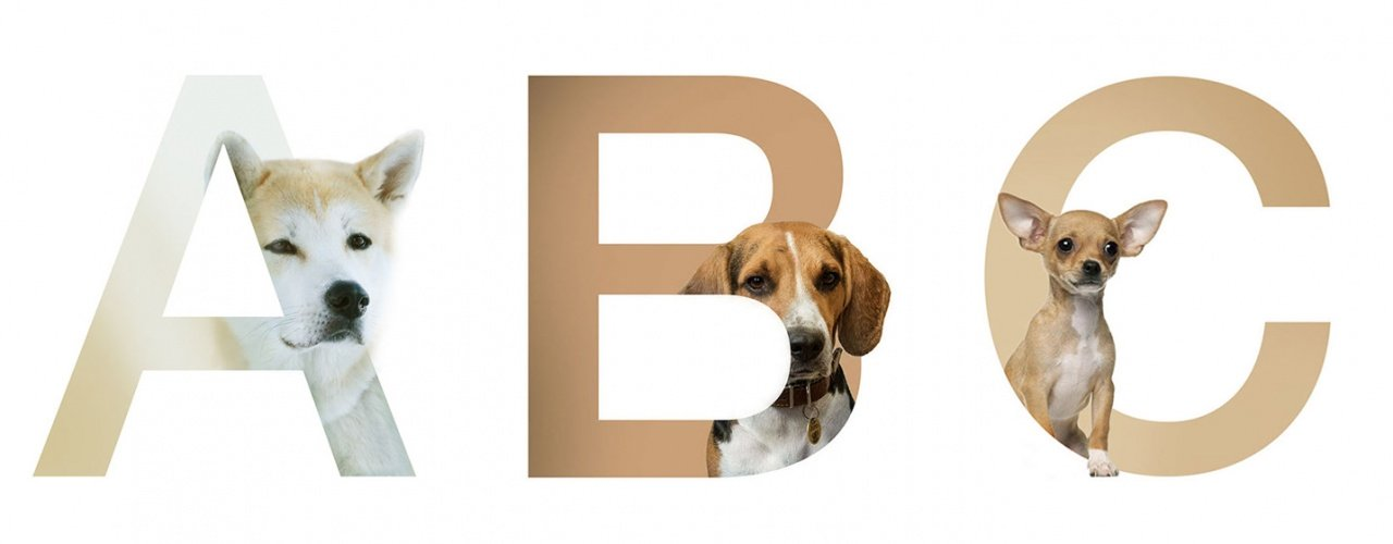 Dog Alphabet, az állati ABC